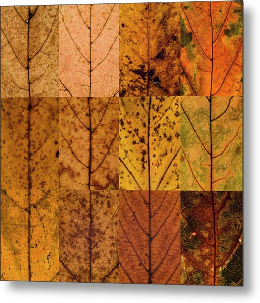 Swatches - Autumn Leaves Inspired By Gerhard Richter Metal Print