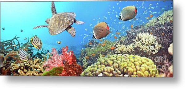 Underwater Panorama Metal Print