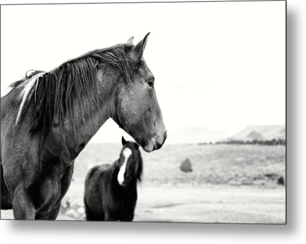 Virginia Range Mustangs Metal Print