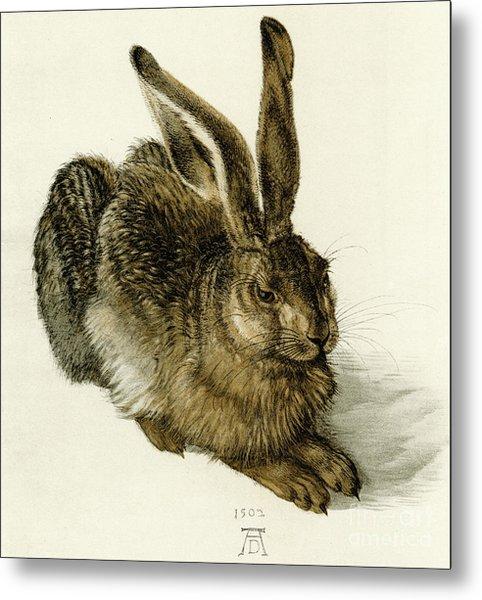 Young Hare Metal Print