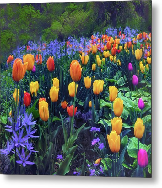 Procession Of Tulips Metal Print