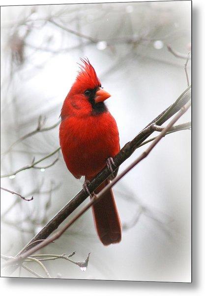 4772-001 - Northern Cardinal Metal Print