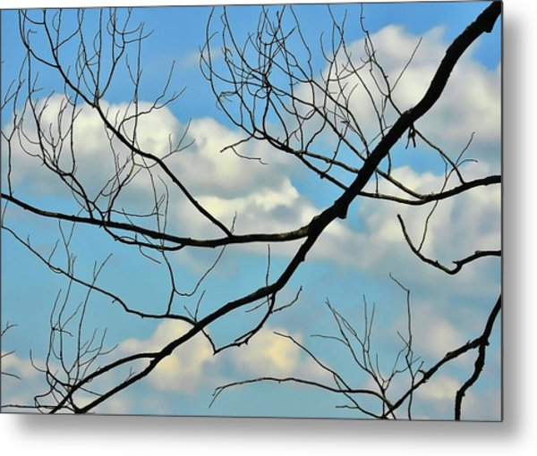 Bare Branches Metal Print by JAMART Photography