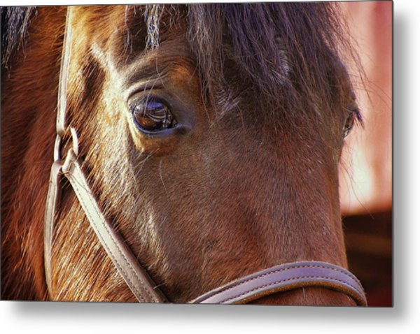 Morgan Horse Metal Print by JAMART Photography