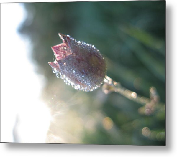 6 Am Metal Print by Candice Wright