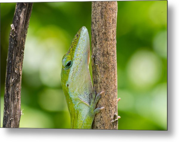 Green Lizard Metal Print