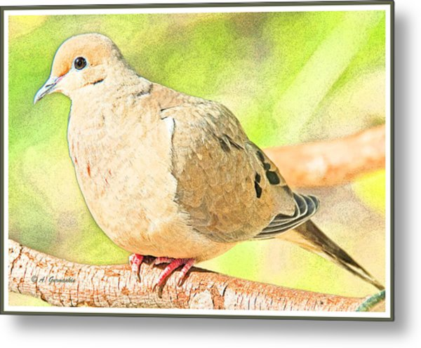 Mourning Dove Animal Portrait Metal Print