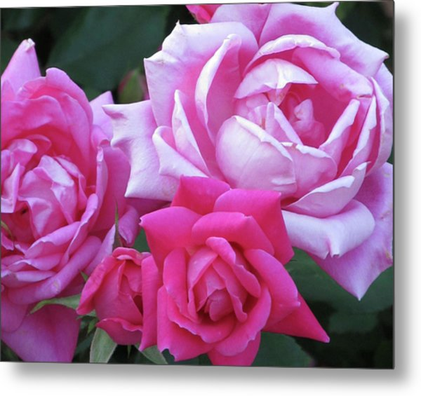 Roses Metal Print by Michele Caporaso
