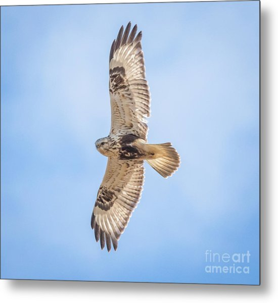 Rough-legged Hawk Metal Print