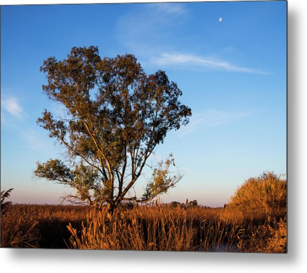 Sunrise In The Ditch Burlamacca Metal Print