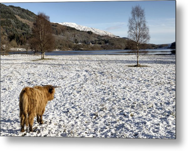 Trossachs Scenery In Scotland Metal Print