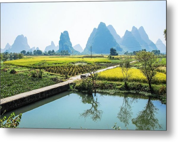 Rice Fields Scenery In Autumn Metal Print
