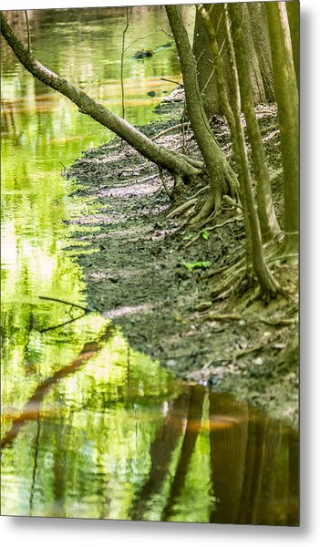 Metal Print featuring the photograph cypress forest and swamp of Congaree National Park in South Caro by Alex Grichenko