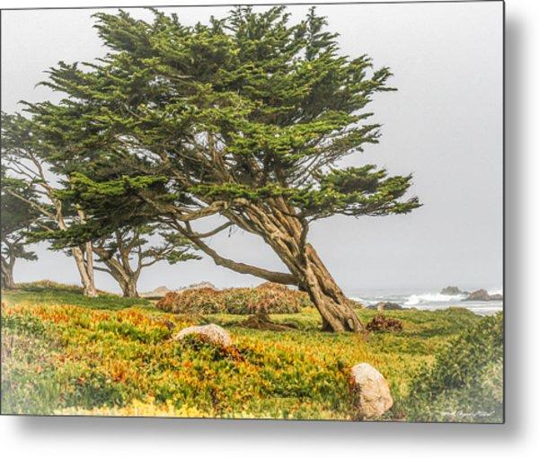 #7803 - Monterey, California Metal Print