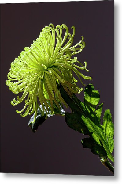 Floral Still Life Metal Print by Robert Ullmann