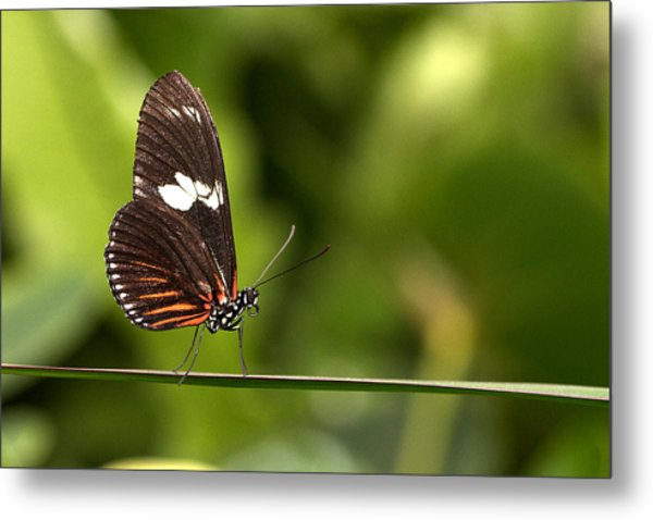 Butterfly Metal Print by Theo Tan