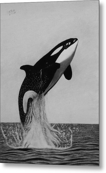 Orca - The Joy Of Freedom Metal Print