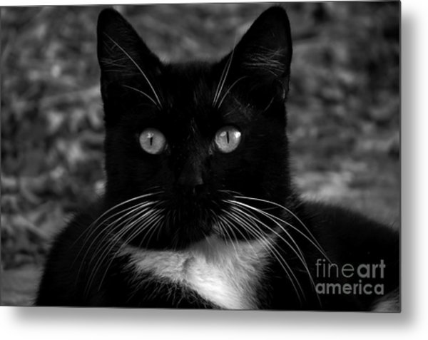 A Black Cat's Life -florida Metal Print