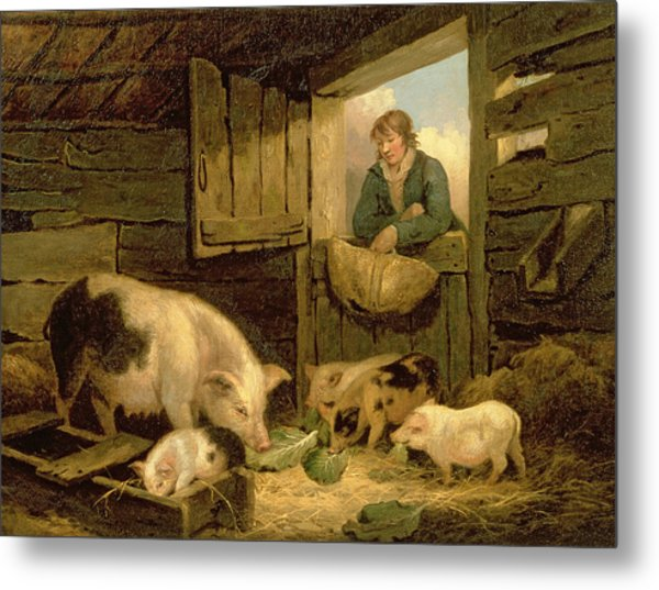 A Boy Looking Into A Pig Sty Metal Print