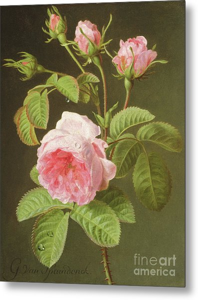 A Branch Of Roses Metal Print