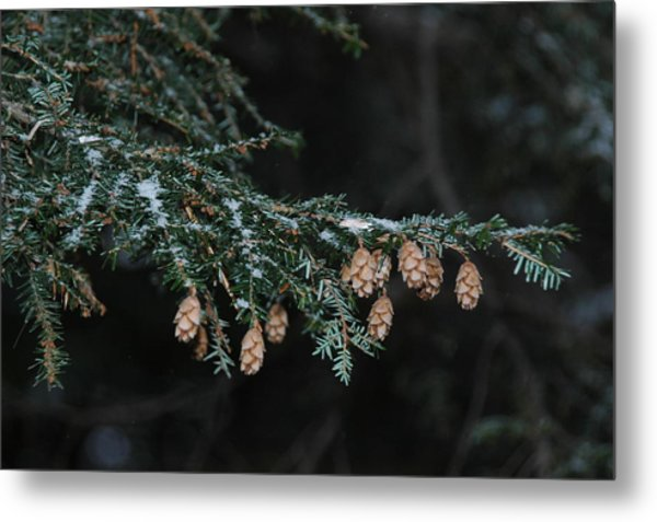 A Branch's Treasure Metal Print by See Me Beautiful Photography