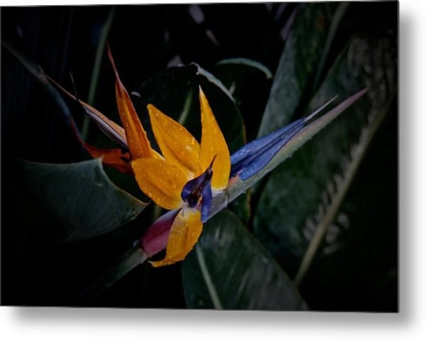 A Bright Blooming Bird Metal Print