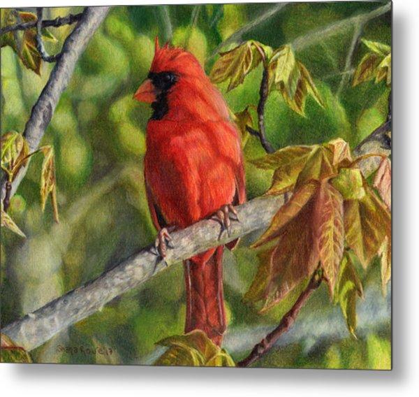 A Cardinal Named Carl Metal Print