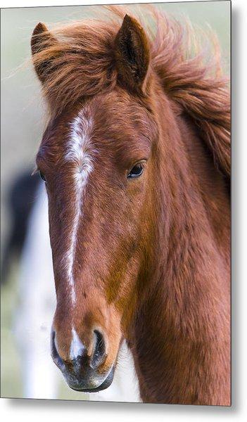 A Chestnut Horse Portrait Metal Print