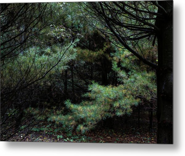 A Clearing In The Wild Metal Print