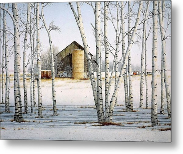 A Cluster Of Birch Metal Print by Conrad Mieschke