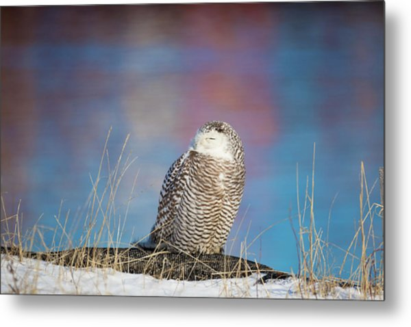 A Colorful Snowy Owl Metal Print