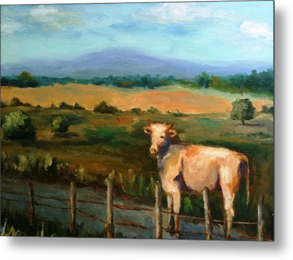 A Cow Up In Missouri Metal Print