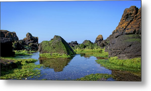 A Crab's Eye View Metal Print