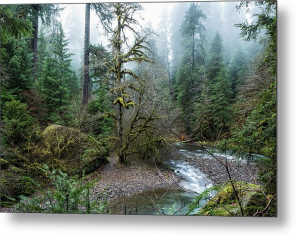 A Creek Runs Through It Metal Print