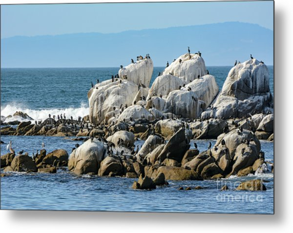 A Crowded Bird Rock Metal Print