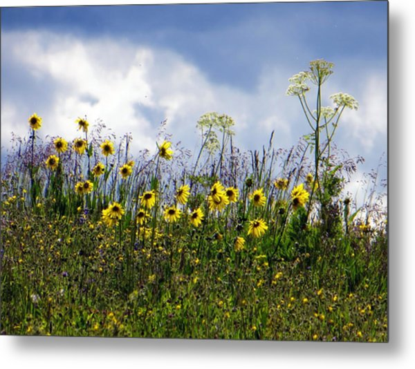 Metal Print featuring the photograph A Daisy Day by Karen Shackles