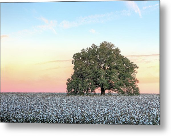 A Deeply Southern Sunrise Metal Print