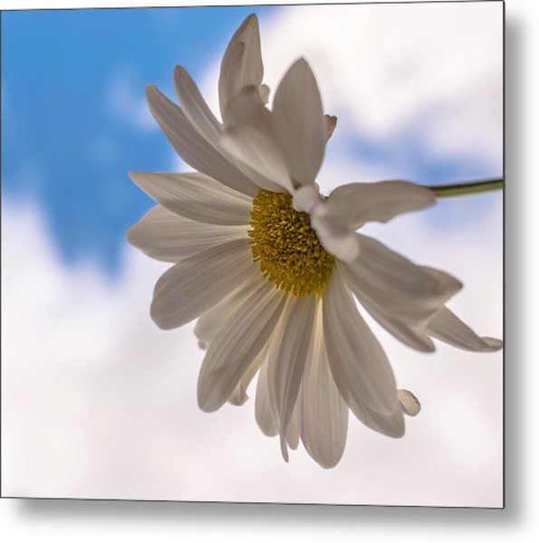 A Different Daisy Metal Print