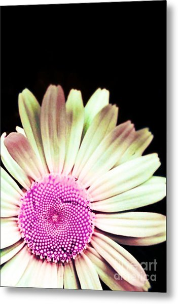 A Different Shade Of Michaelmas Metal Print