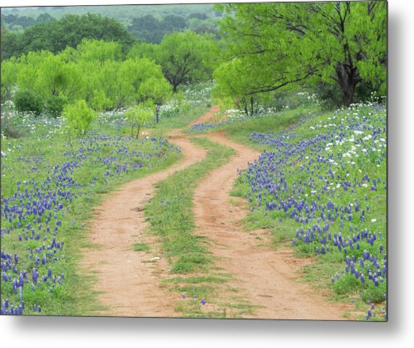 A Dirt Road Lined By Blue Bonnets Of Texas Metal Print