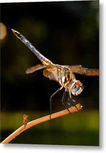 A Dragonfly Metal Print