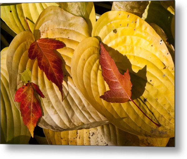 A Fall Contrast Metal Print