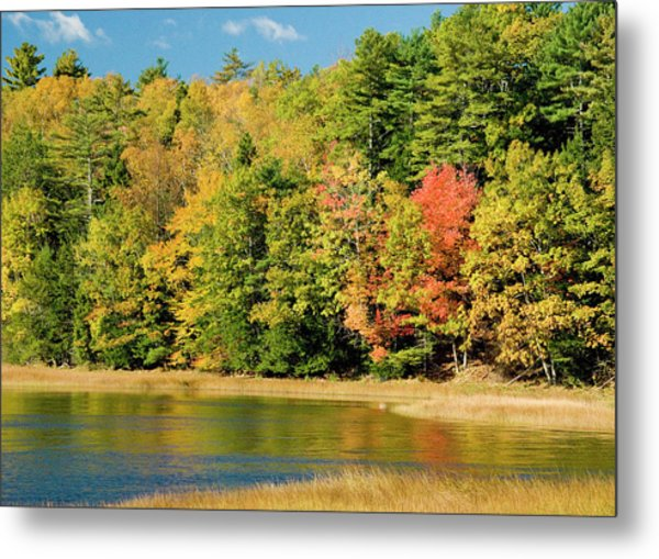 A Fall Pond   Metal Print