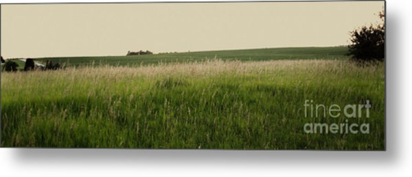 Metal Print featuring the photograph A Field Of Grass by Sandy Adams