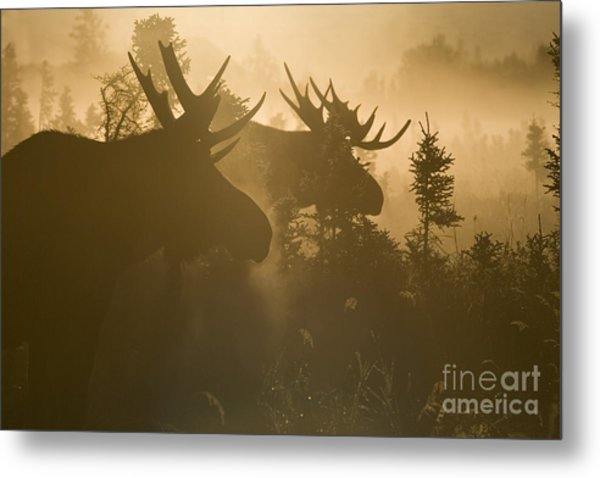 A Foggy Morning Metal Print