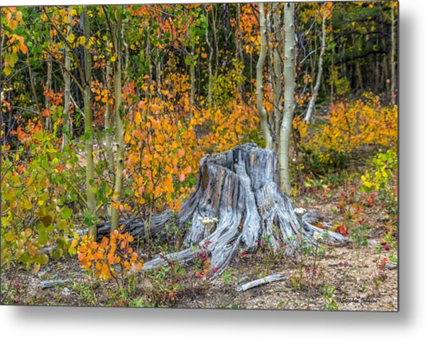 A Forest Of Color Metal Print