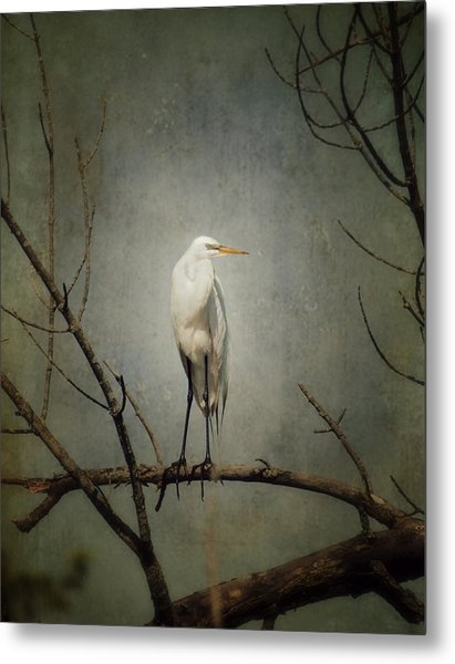 A Great Egret Metal Print