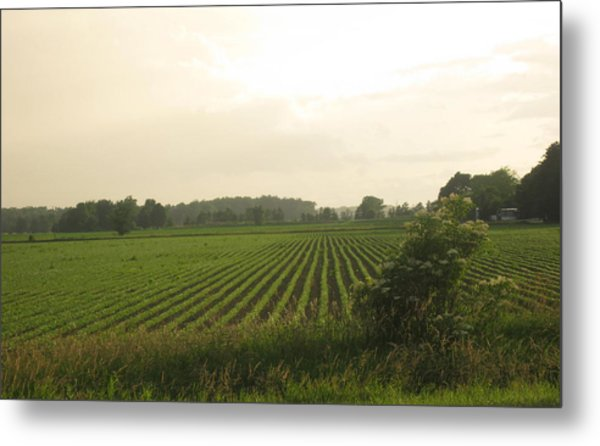 A Hint Of Tuscany Metal Print by Patrick Murphy