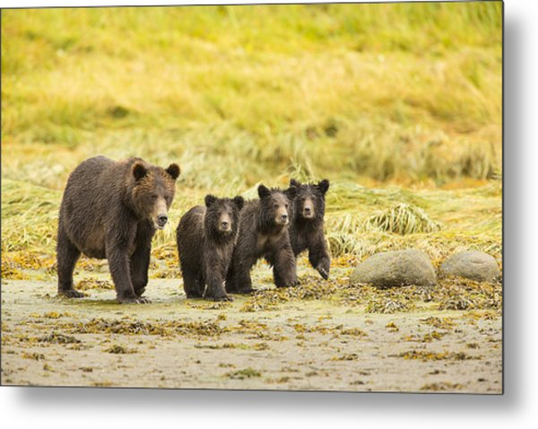 A Large Family Metal Print by Tim Grams
