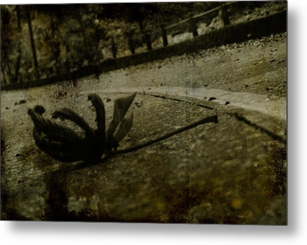 A Leaf By The Way Metal Print by Valmir Ribeiro